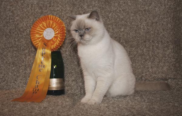 tin til katinka